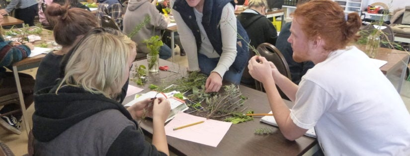 People observing plants on tables in classrooms